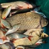 Pescuit eLogos